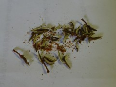 ミツバツツジの実をほぐす