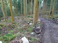 左の登山道と右の仮設林道