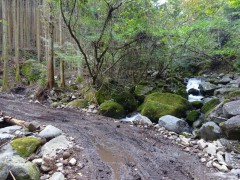 川を渡る仮設林道、従来渡渉点はこの上流