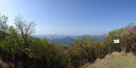 ミツバツツジが咲く一ノ岳山頂のパノラマ