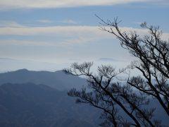 小枝の先に見える阿蘇山