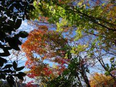 稜線上の紅葉