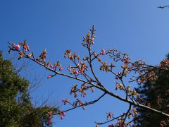 まだ咲いていない枝