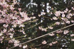 花のない枝には芽吹き