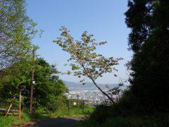 帆柱稲荷への道沿いの『黄桜』
