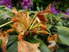 一つ残した花柄